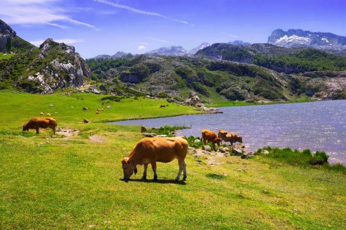 Lago Ercina, en Lagos de Covadonga