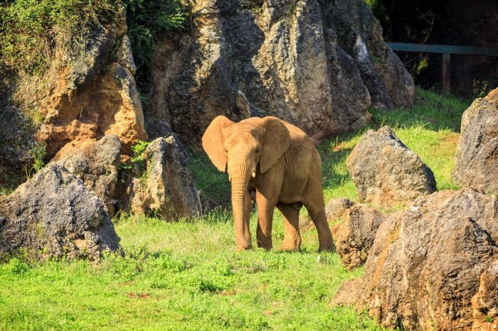 Parque de la Naturaleza de Cabárceno elefantes