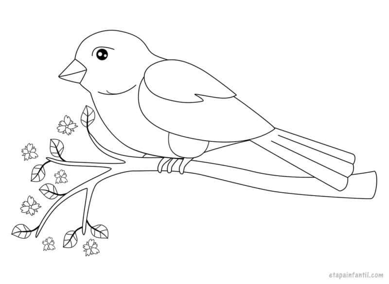 Dibujo de Pájaro posado en una rama para colorear