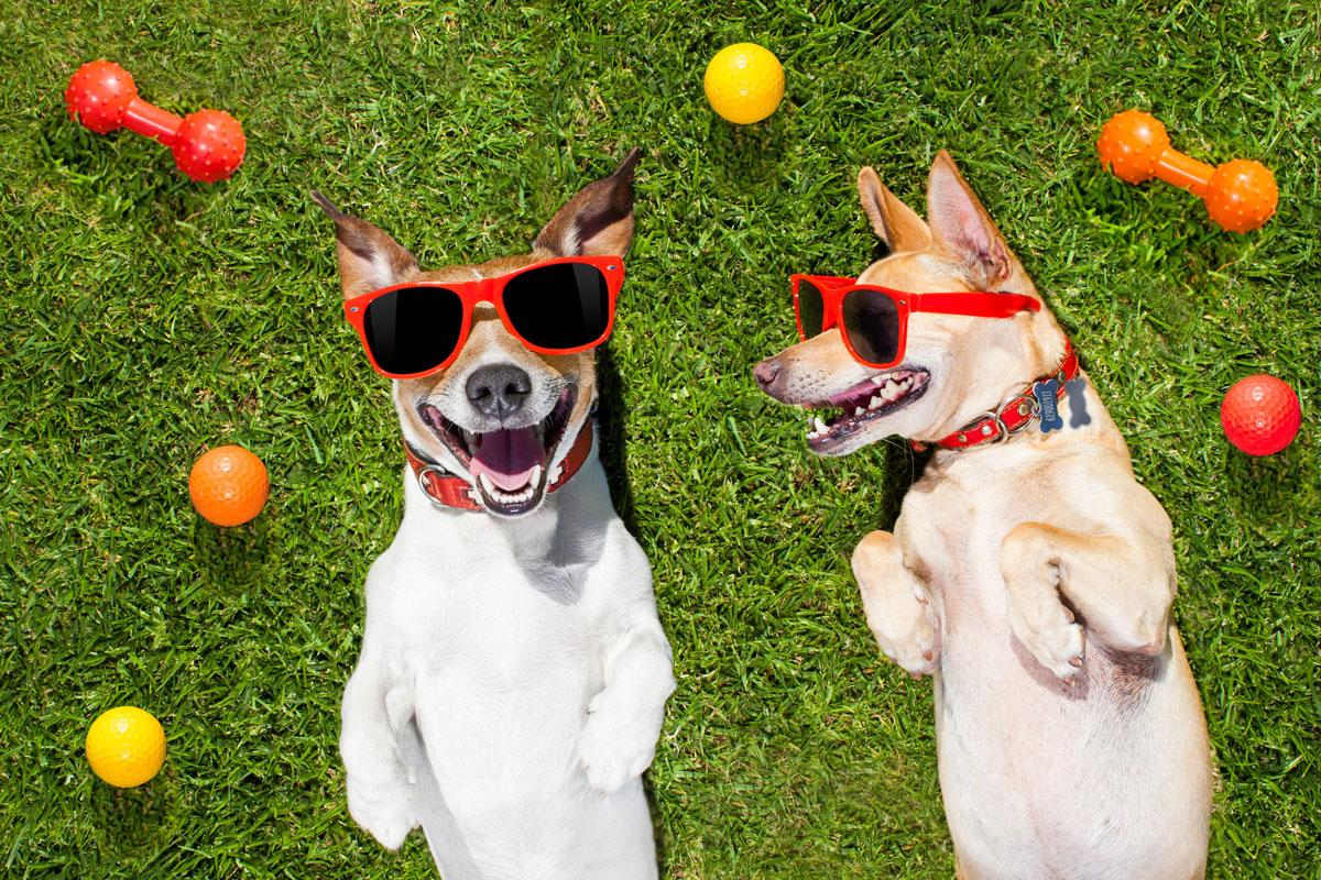 30 chistes de animales para contarles a los niños