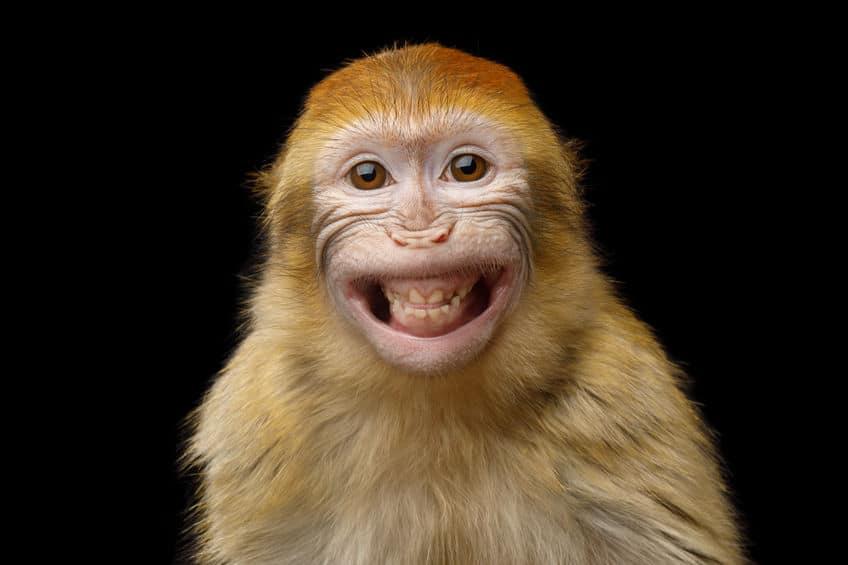 Chistes graciosos para niños de animales