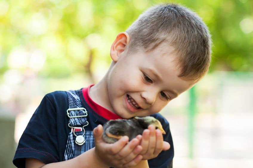 Poemas cortos para niños sobre animales