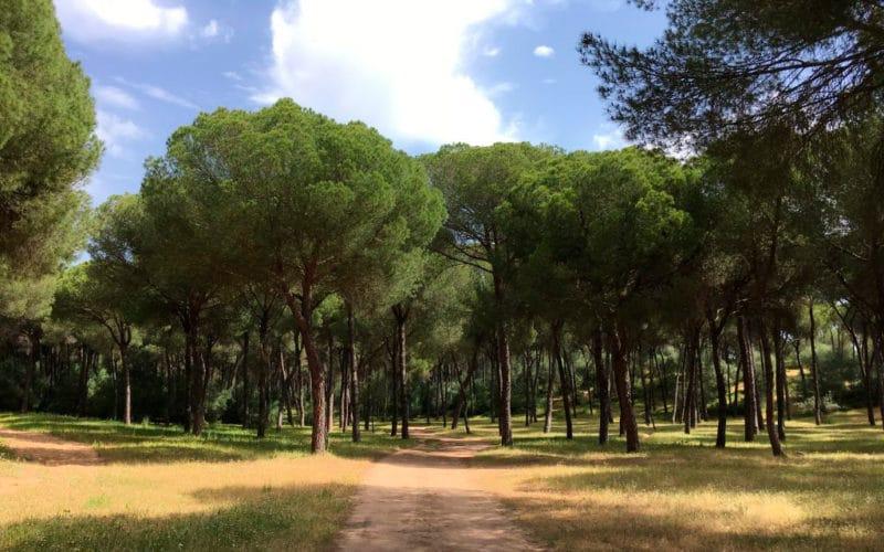Área recreativa Los Pinares de Aznalcázar, en Sevilla