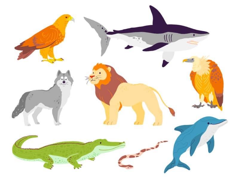 Ejemplos de animales carnívoros
