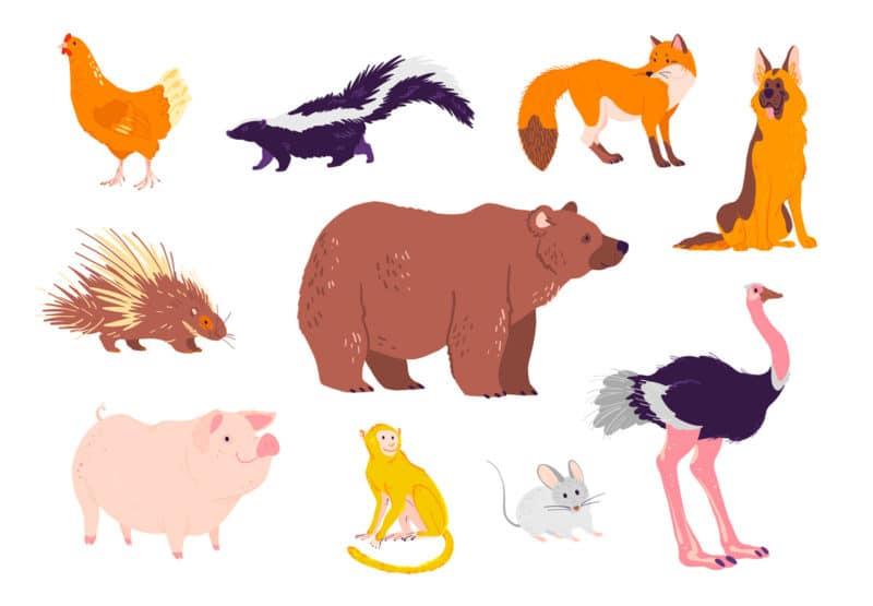 Ejemplos de animales omnívoros