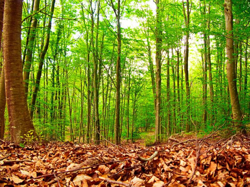 Montseny Parque Natural