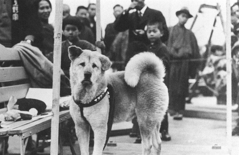 Hachiko 1934